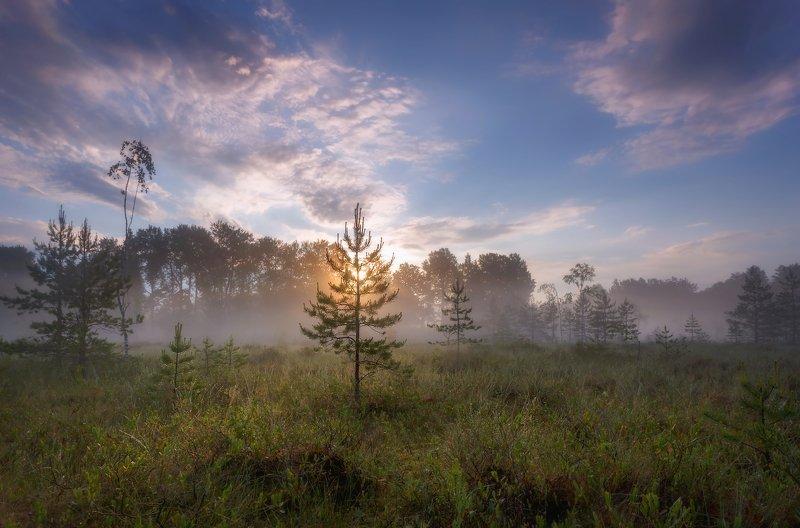 ленобласть Утро на болоте)photo preview