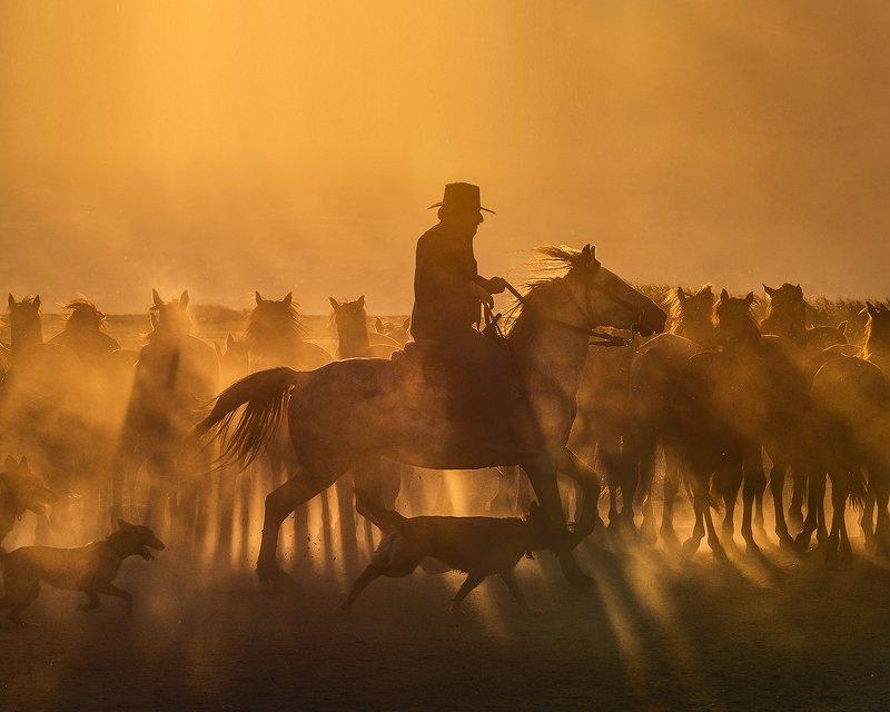 cappadocia, horse photo preview