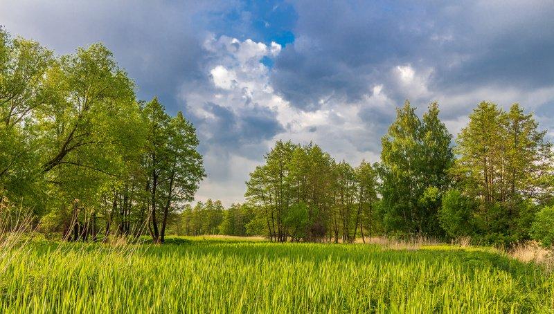 лес, деревья, природа, облака, вечер, лето photo preview