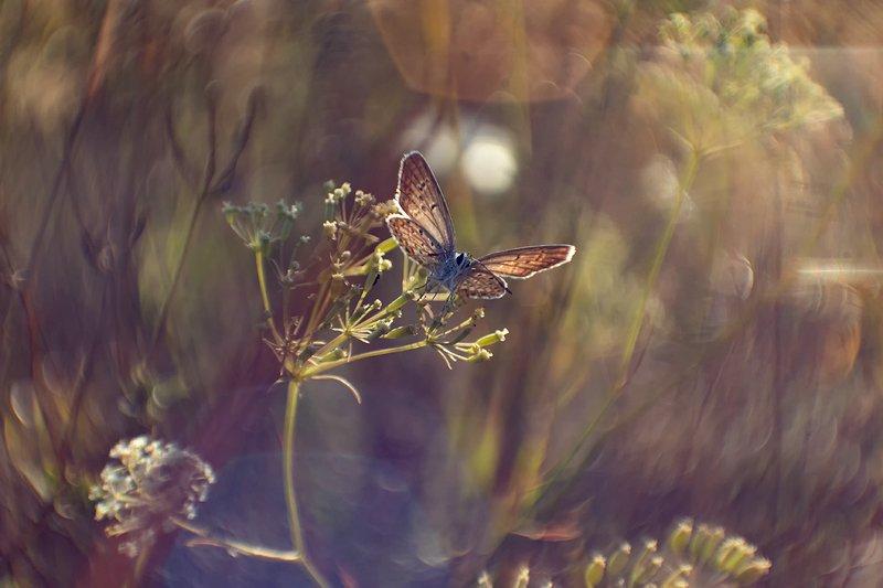 макро, бабочка Чуть ближе к осениphoto preview