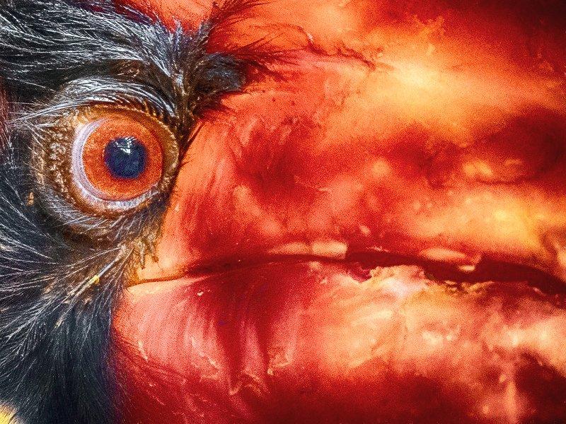 Огненная акварель гомраяphoto preview