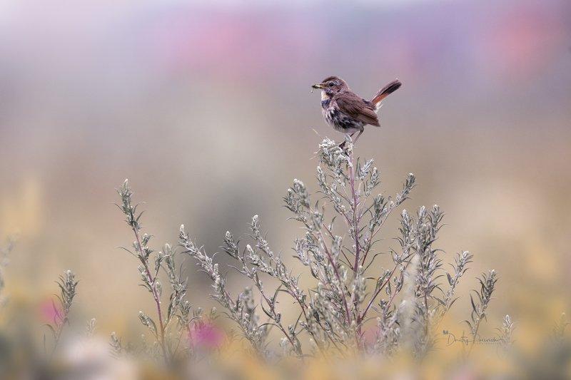 природа, лес, поля, огороды, животные, птицы, макро Уж осень стучится фото превью