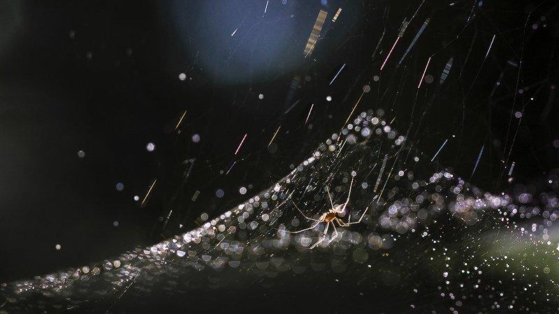 паутина, паук, свет Звездопадphoto preview