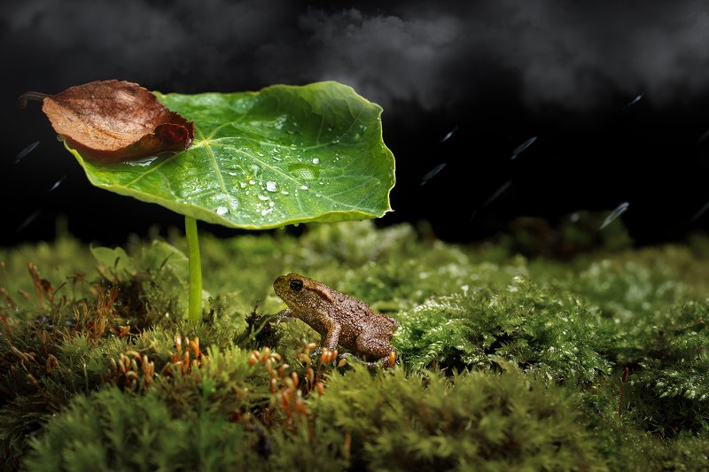 лягушка, лягушонок, фауна, макро, природа Лягушонокphoto preview