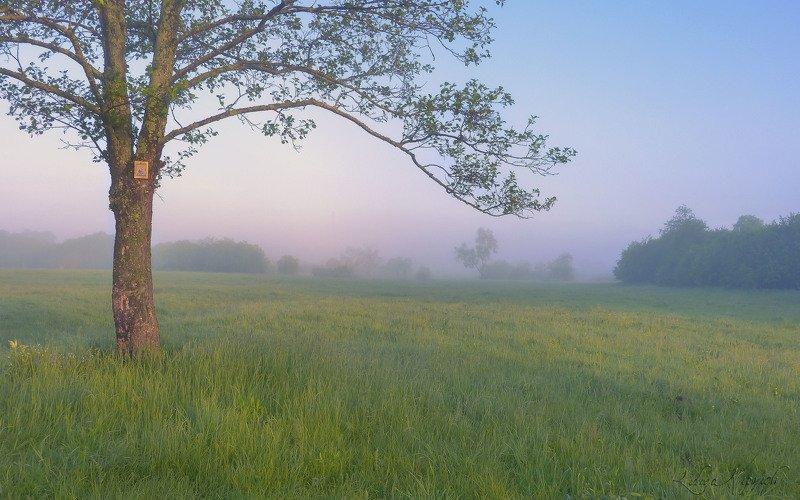 пейзаж, утро, лето, туман начало дняphoto preview