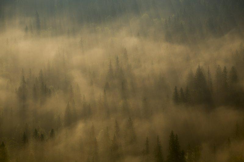 россия, урал, тайга, лес, туман, парма, дымка, свет, утро Магия таежного утраphoto preview