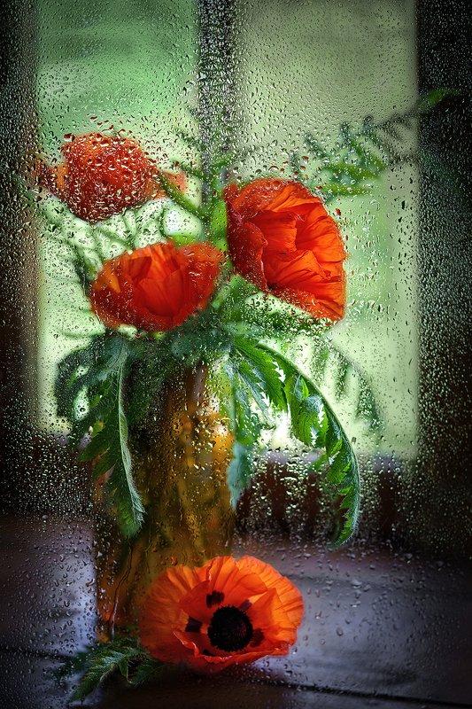 маки, цветы, дождь, стекло, натюрморт, капли, окно Макиphoto preview