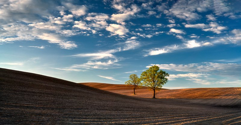 landscape Two Oaks_panoramaphoto preview