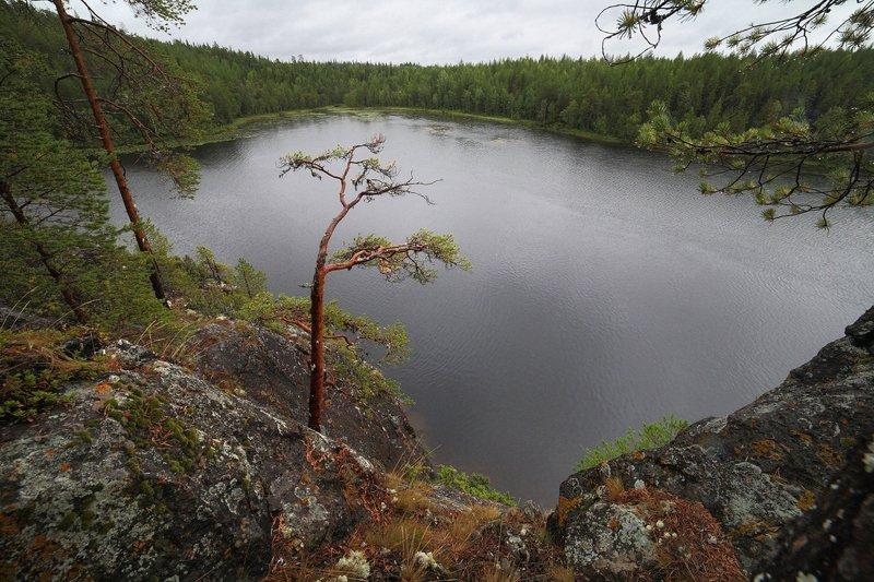 карелия, кереть, озеро, сосна, пасмурно На озере Варацкомphoto preview