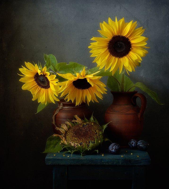 натюрморт,цветы,подсолнухи подсолнухи...photo preview