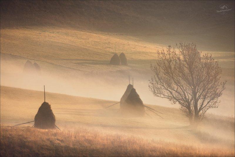 Карпаты, Закарпатье, осень,  Карпаты...Осень...Утро...photo preview