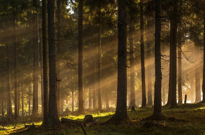 mountains, romania, trees, sunrise, landscape, nature, travel, summer, forest, fog, lights Forest Lightsphoto preview