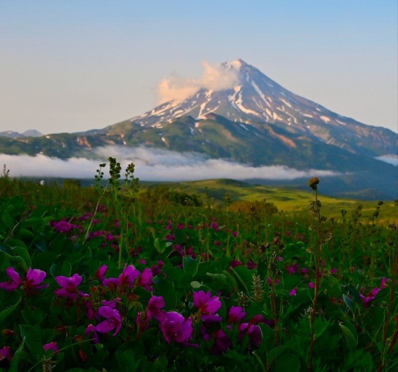 камчатка, вилючинский, рододендрон, пейзаж, цветы, никон Цветение камчатских рододендроновphoto preview