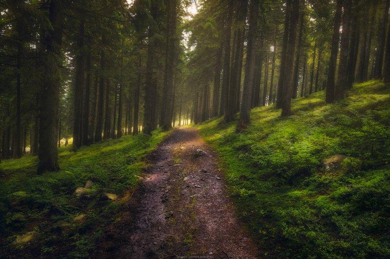 карпаты, поход, лес, природа, пейзаж, тропа, свет, лето Лесными тропамиphoto preview