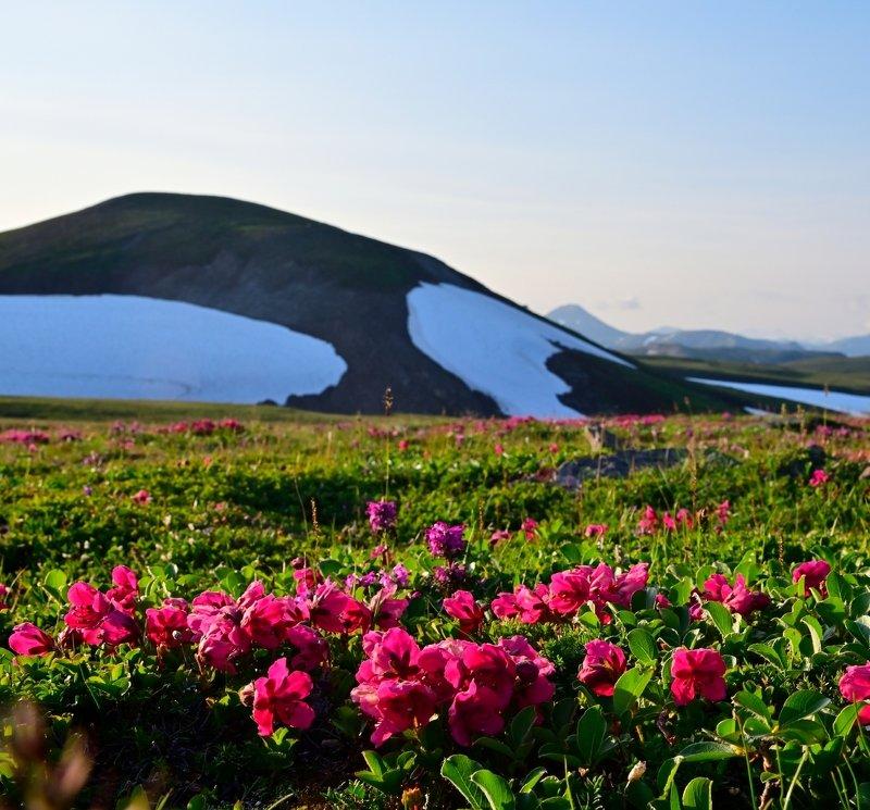 камчатка, тундра, рододендрон, вулкан Летняя тундра. Камчаткаphoto preview