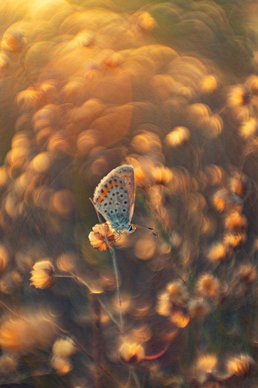 макро, бабочка Догорающее летоphoto preview