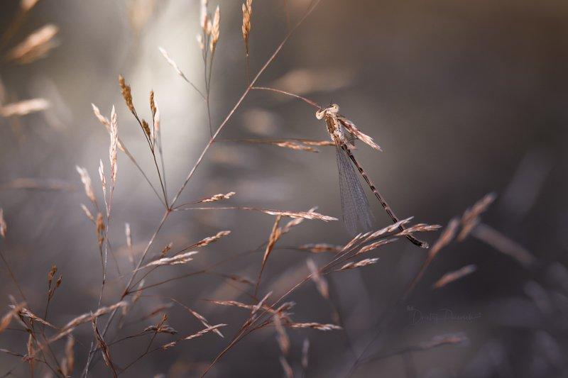 природа, лес, поля, огороды, животные, птицы, макро Уходящее лето фото превью