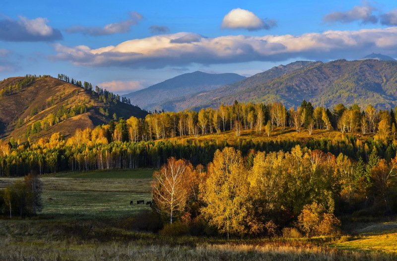 горы Алтайская   осеньphoto preview