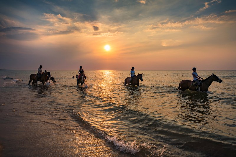 horse bath in the sunset sea baltic water sun clouds sky nature beach dranikowski beautiful waves Horses bath in the sunsetphoto preview