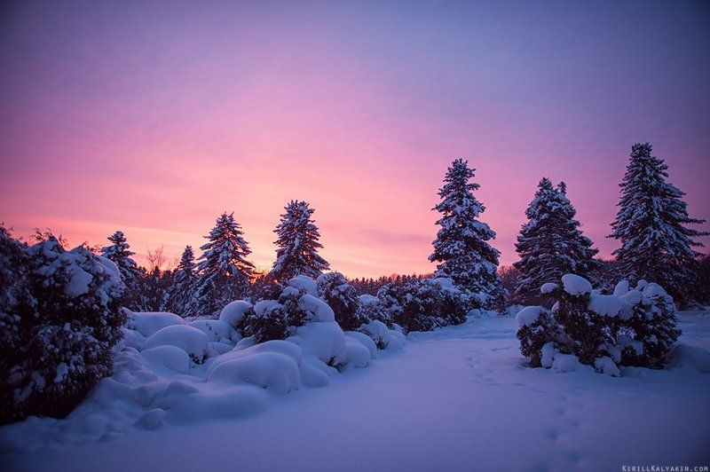 зима, закат, ботанический сад, нижний новгород, сугробы Зимний Ботаническийphoto preview