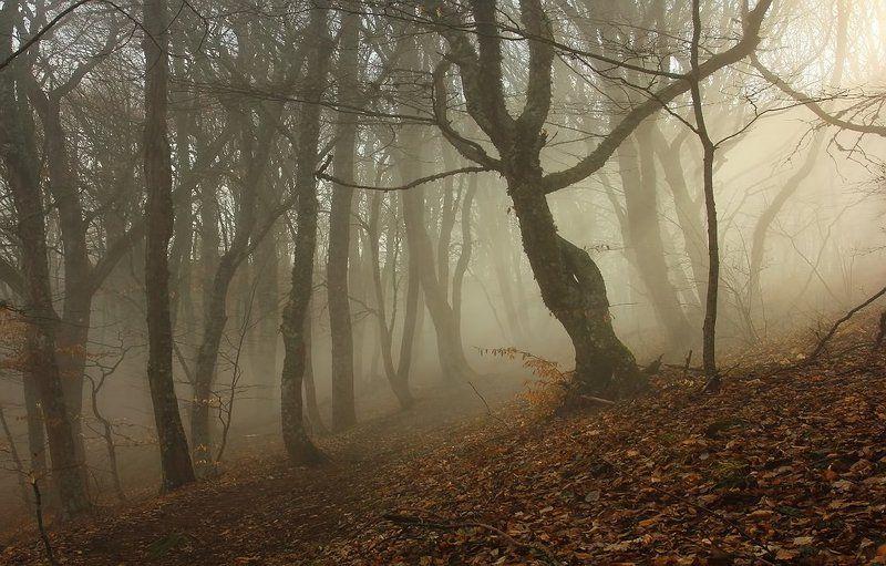 крым, туман, лес, солнце Солнечный туманphoto preview