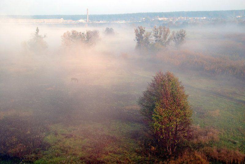 итк строгого режима , лошадь, туман , утро . это сладкое слово  - свобода ( с )photo preview