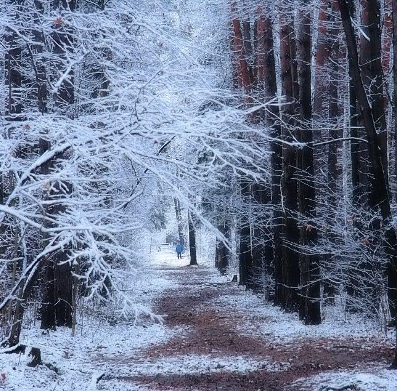 Зимний парк.photo preview