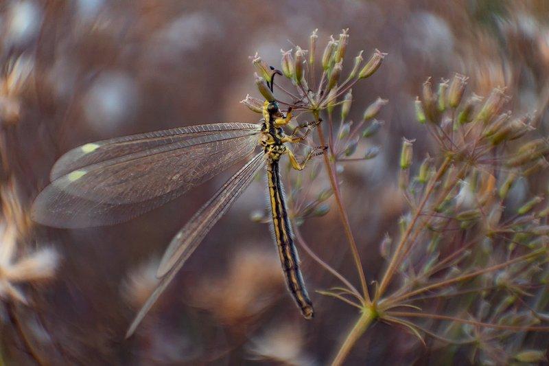 макро, насекомые Муравьиный левphoto preview
