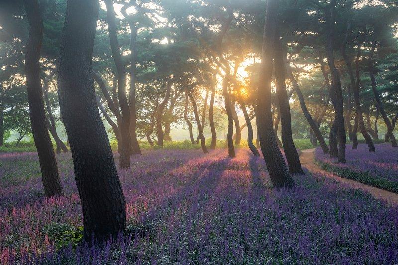 flower, bloom, forest, place, korea, pine Purple signalphoto preview