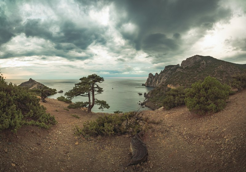 Крымский бонсайphoto preview