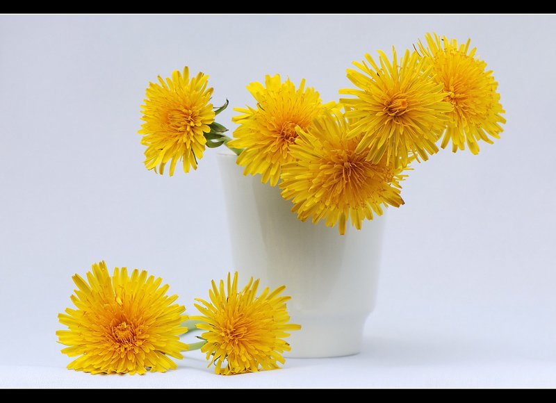 желтые,цветы,на,белом Желтые цветыphoto preview