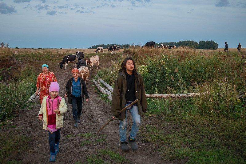 провинция, село, стадо, вечер Домой...photo preview