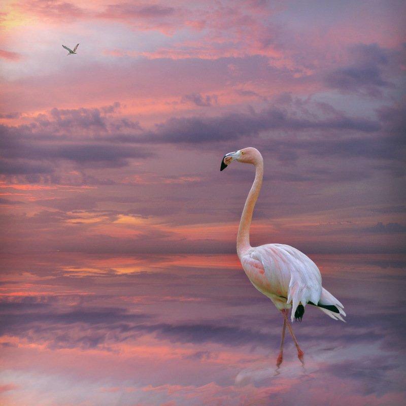 розовый фламинго в лучах заката Розовый фламингоphoto preview