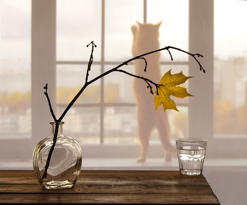 натюрморт кошка осень Куда уходит Лето???photo preview