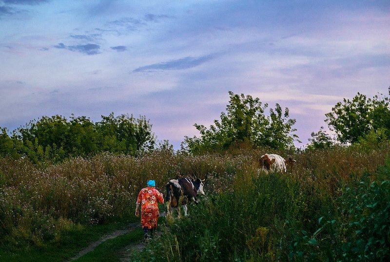 провинция, село, стадо, вечер Домой... (2)photo preview