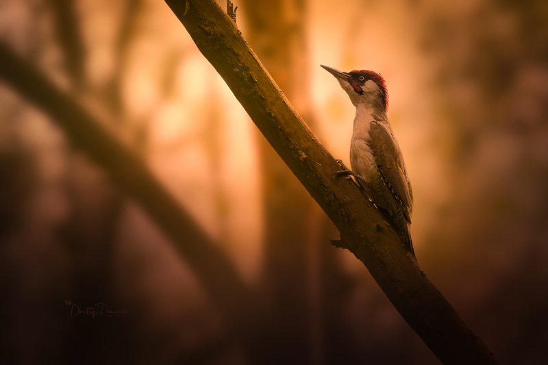 природа, лес, поля, огороды, животные, птицы, макро Последний закат уходящего лета фото превью