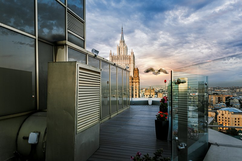 чайка, москва, золотое кольцо, отель, закат, Чайка над крышей отеля Золотое Кольцоphoto preview