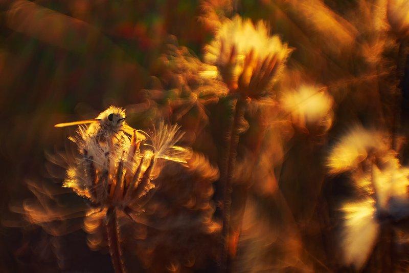 макро, насекомые, муха жужжало ...как пушинка...photo preview