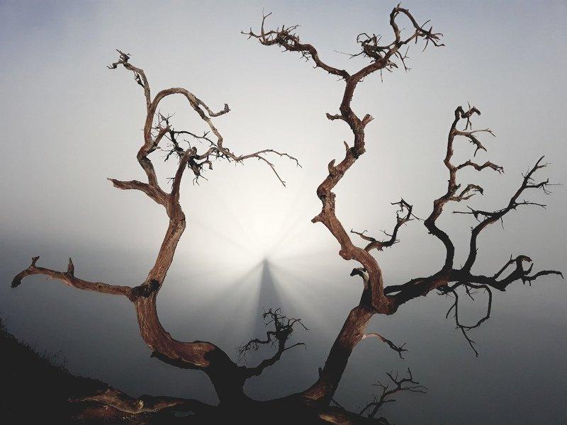 брокенский, призрак, вулкан, иджен, туман Призракphoto preview