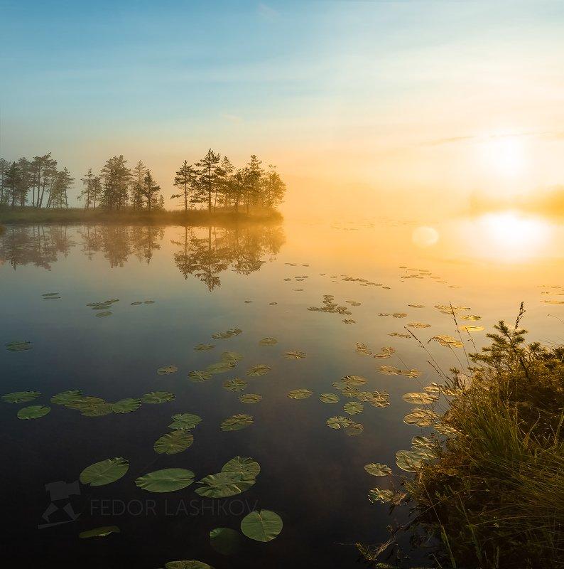 ленинградская область, рассвет, лето, август, тепло, сосна, озеро, солнце, туман, отражение, деревья, берег, оранжевый, жёлтый, листья, кувшинки, Встречая рассветphoto preview