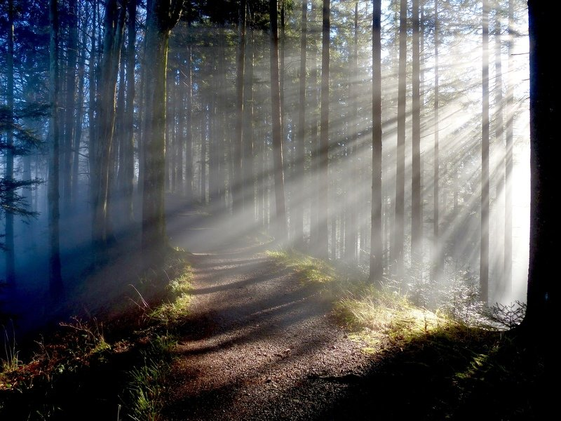landscape, nature, light, forest, sunlight, trees, mood,  Looking for lightphoto preview