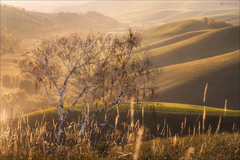 алтай, алтайский край, сибирь, тоскана, осень Сибирская Тосканаphoto preview