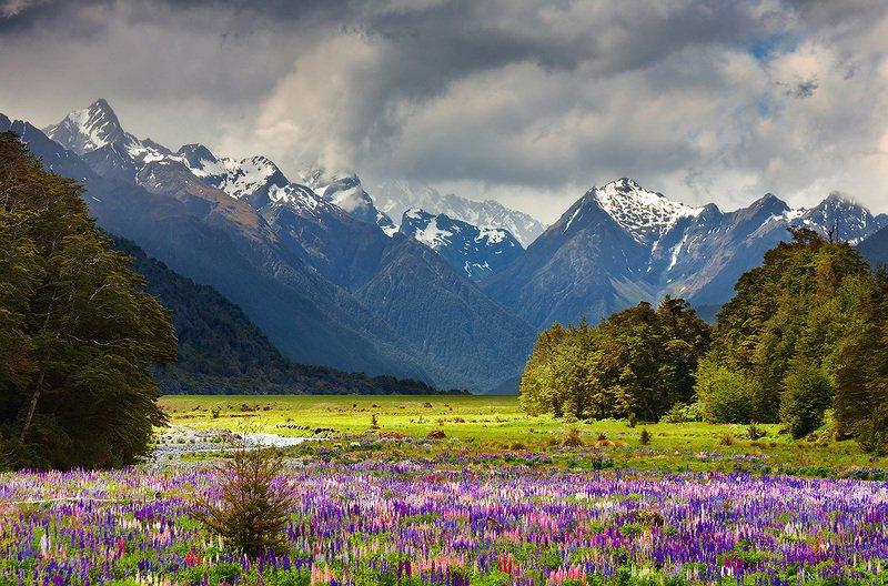 Новая Зеландия 12photo preview
