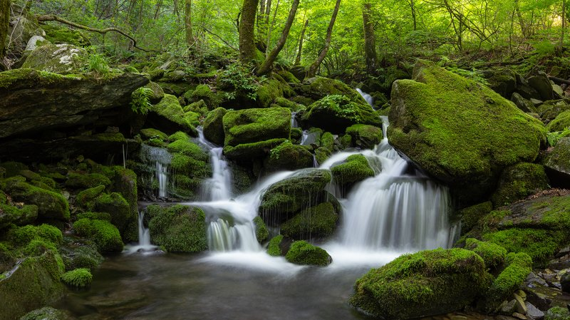 forest, light, trees, moss Deep Mountain Moss Valleyphoto preview