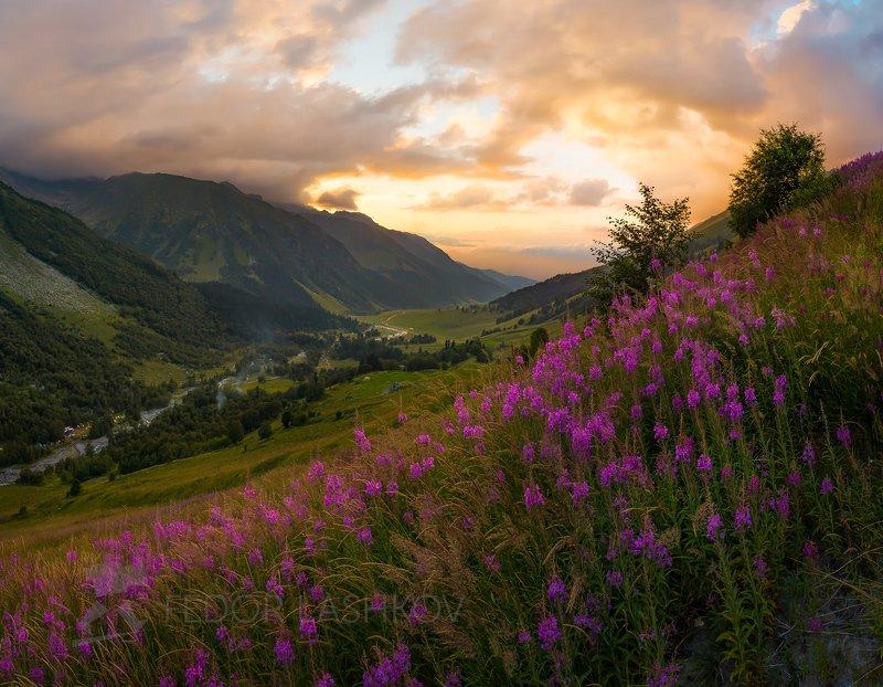 гора, горы, скала, архыз, лето, кавказ, софийские водопады, иван-чай, цветы, луг, альпийский луг, закат, Цветёт иван-чай в горах Кавказаphoto preview