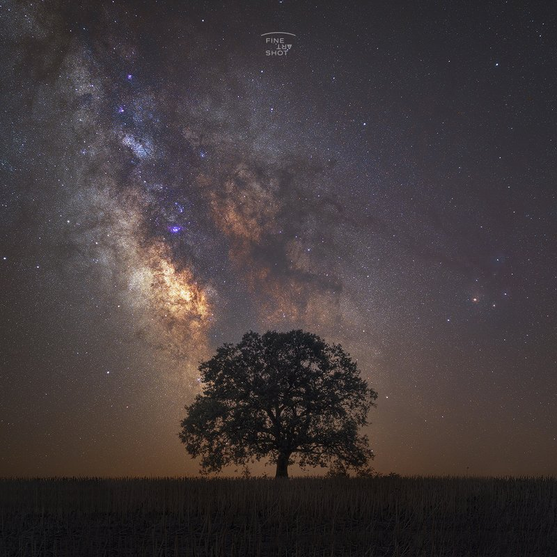 The old oak treephoto preview