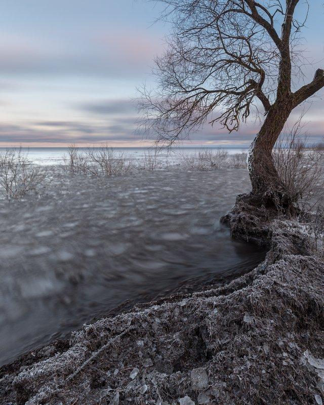 новгородская область, ильмень, Артистphoto preview