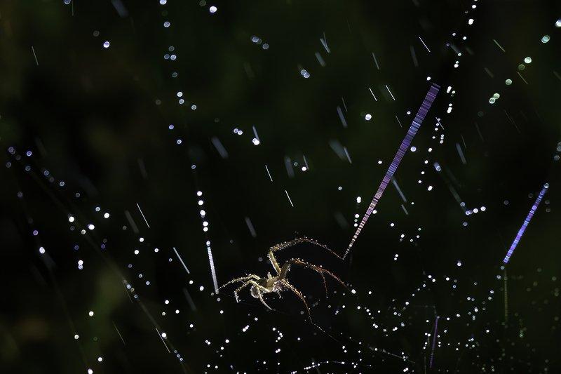 паук, капли, дождь, паутина  Дождь и молнииphoto preview