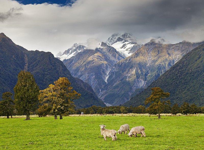 Новая Зеландия 14photo preview