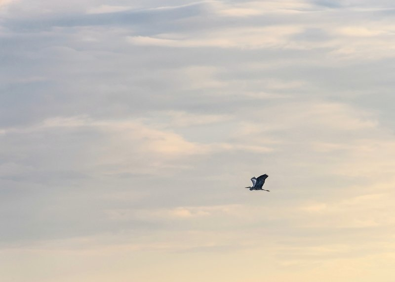 Одинокий полётphoto preview